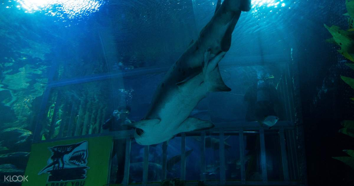 Cage Rage Experience by Aquaria KLCC in Kuala Lumpur